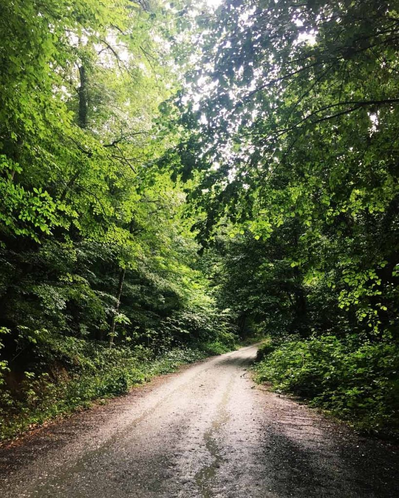 İğneada Longoz Ormanları Millî Parkı